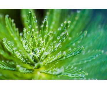 Beneficii miraculoase ale uleiului de canepa